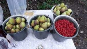 fruits-in-armenia